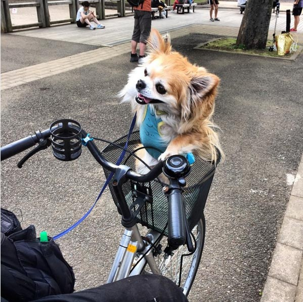 dogs and bikes 2