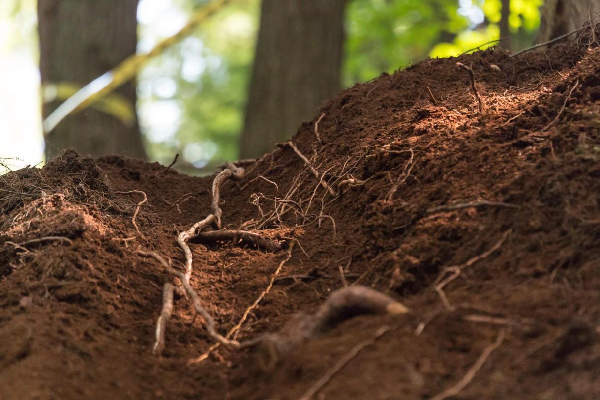 mtb trees loam dirt