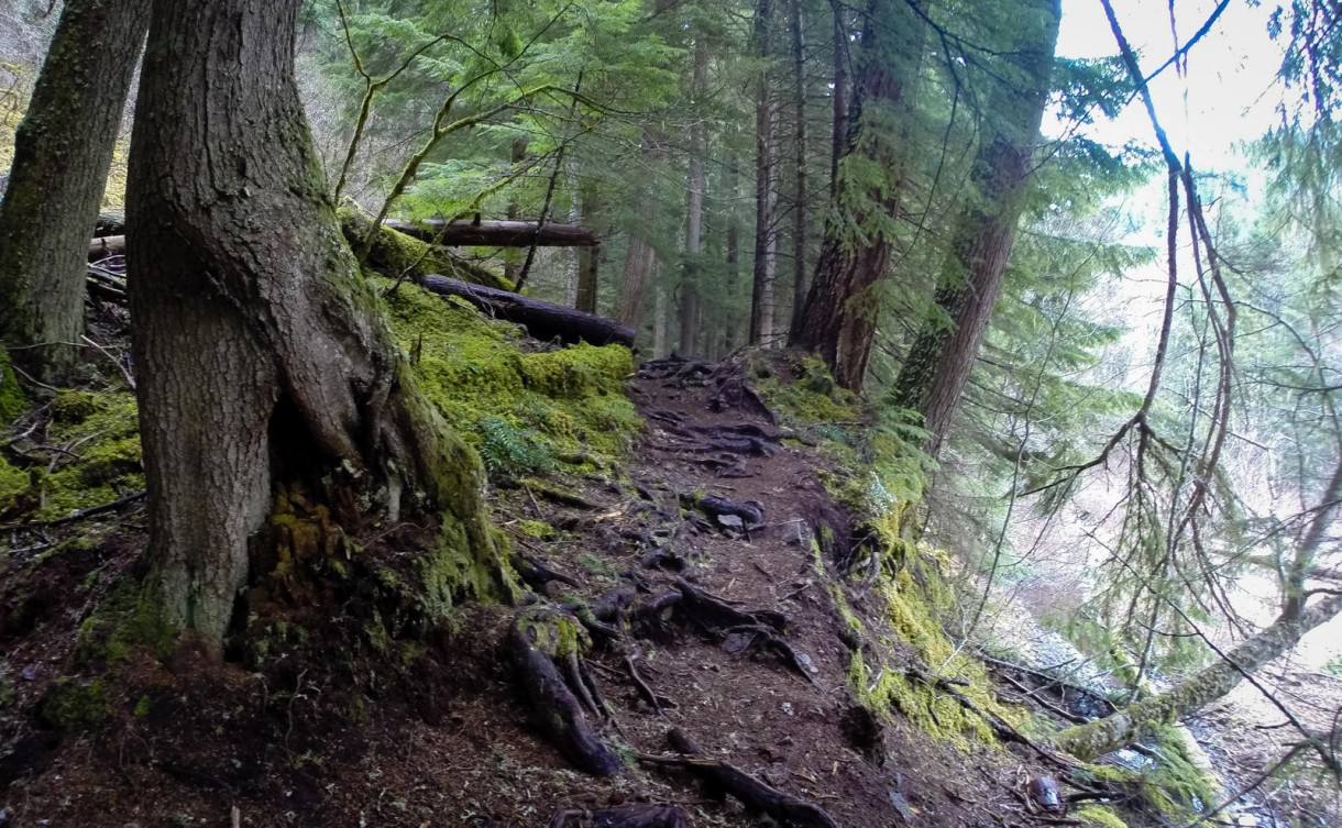 mtb trees roots trail