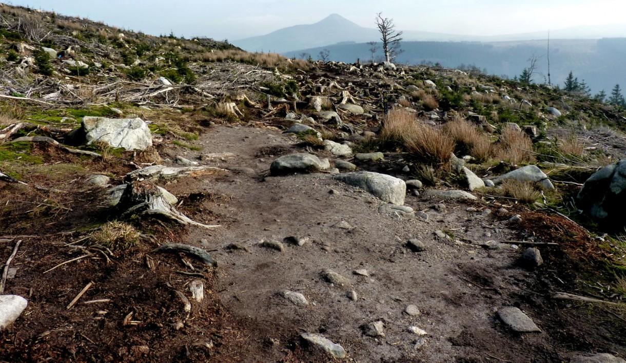 tree less trail