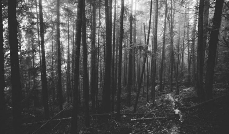 yoann barelli josh carlson mtb woods