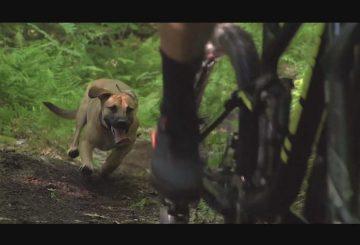 flow-trail-dog