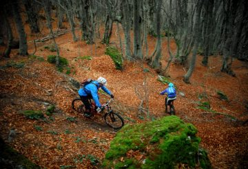 ridign-in-fall-mtb-gold-leaves-3