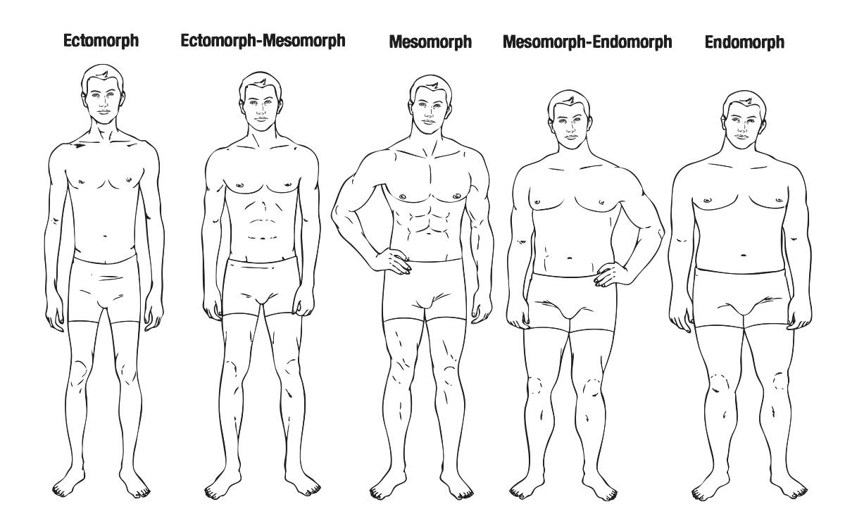 man body type