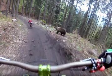 bear chasing mtb