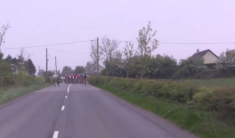 horse road bike race