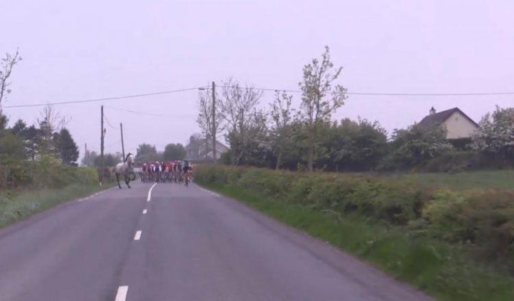 horse road bike race