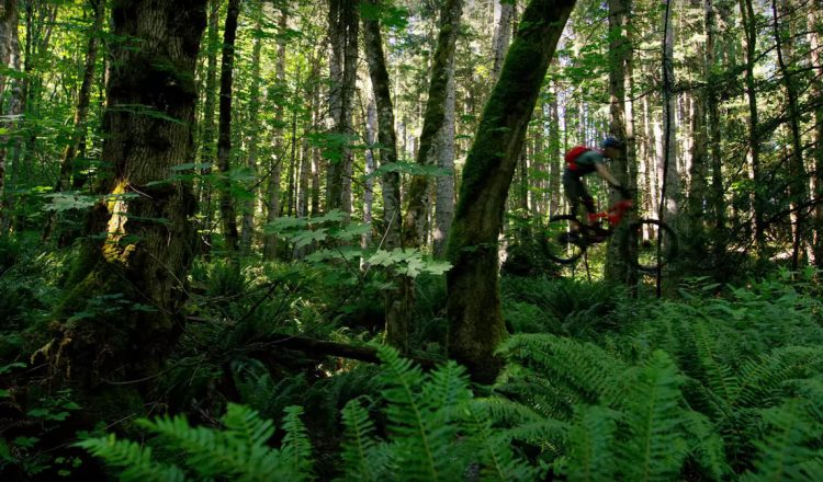 jeff kendall weed bc vancouver jump mtb jungle
